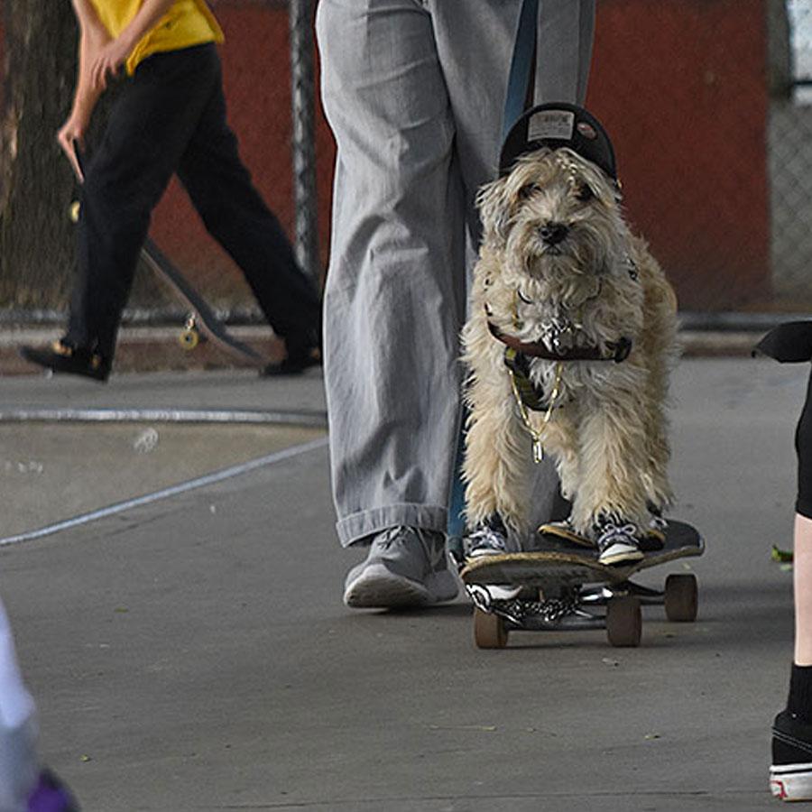 Dog of the Day Headshot Photo