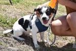 GFL Sarasota - Pup of the Day