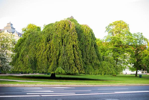 Vans Park Series at Malmo - Wacky Tree