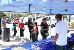 Marinela Demos in Florida - Samples
