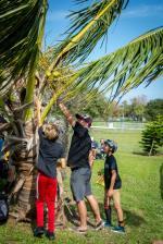 GFL Cocoa Beach - Coconut Water
