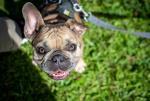 GFL Cocoa Beach - Dog of the Day
