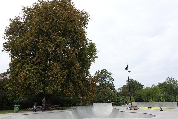 Big Tree in Copenhagen