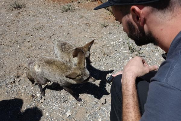 HiDefJoe and Varmit on Tourist Mission in South Africa
