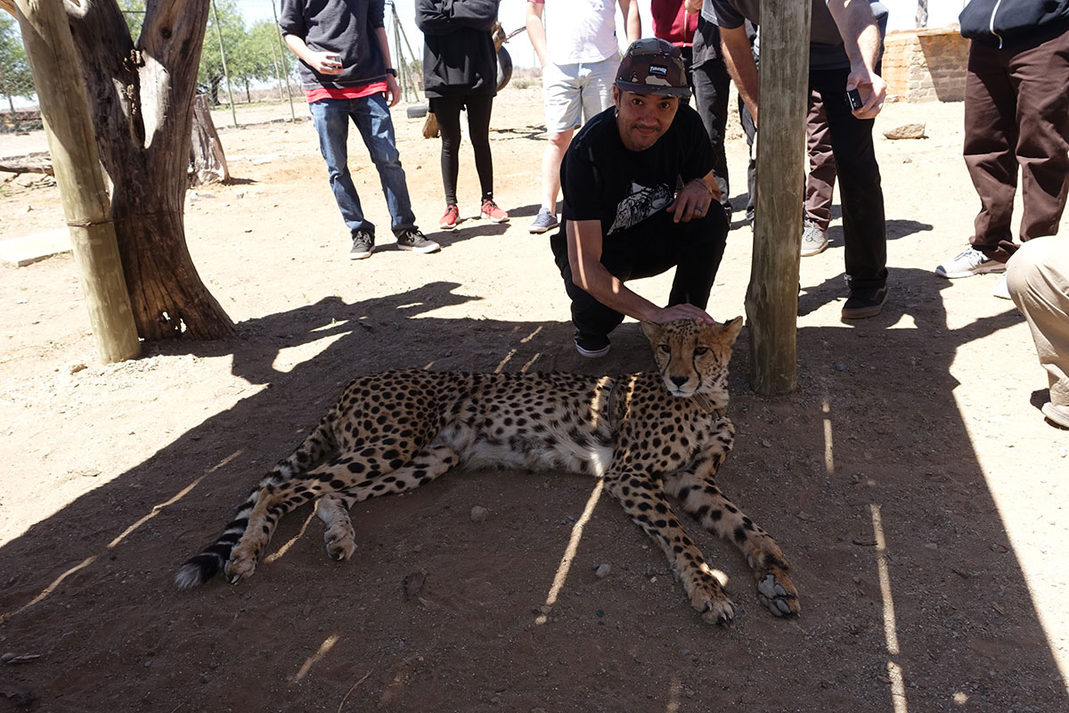 Cheetas on Tourist Mission in South Africa