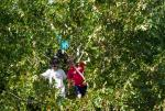 Creepers in the Trees at Get Rad for Ray